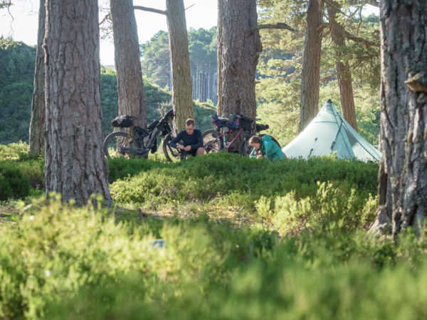 Bikepacking at it best, Camped amongst the Ancient Caledonian Pine Forest